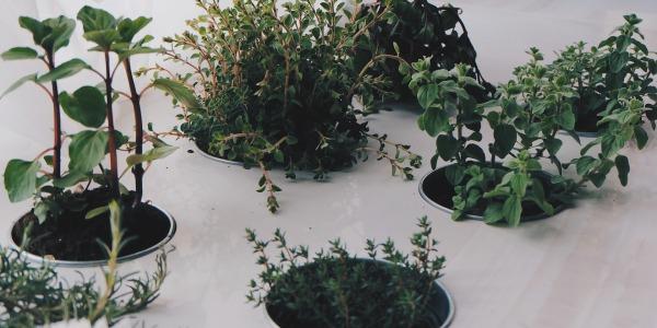 Pot aromatique personnalisé : un échantillon de nature sur-mesure